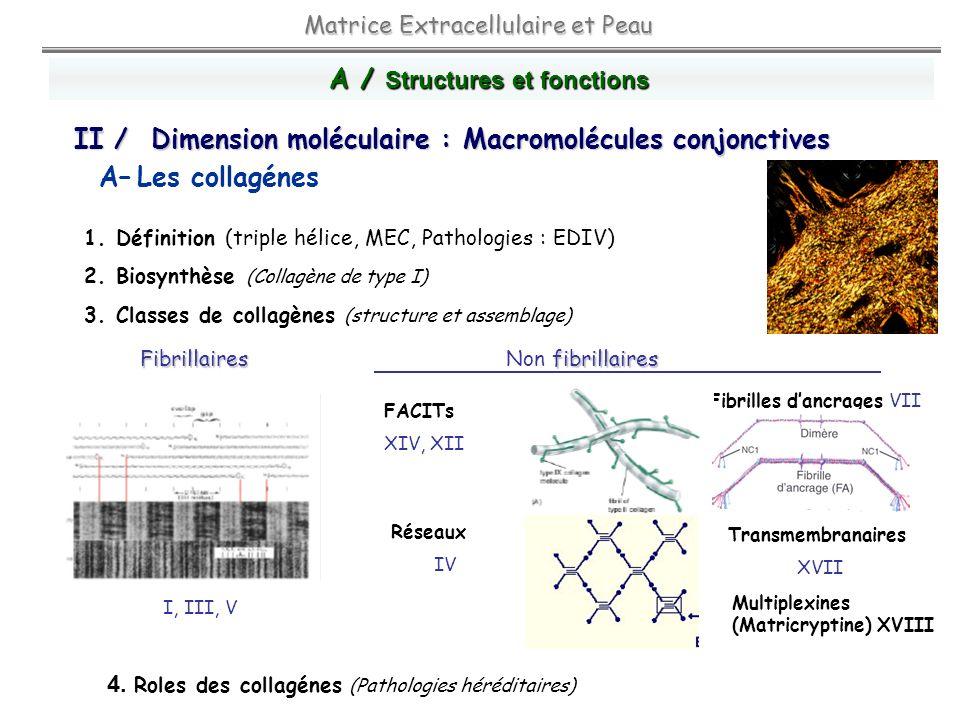 A– Les collagénes A / Structures et fonctions Matrice Extracellulaire et Peau 1. Définition (triple hélice, MEC, Pathologies : EDIV) 2. Biosynthèse (C