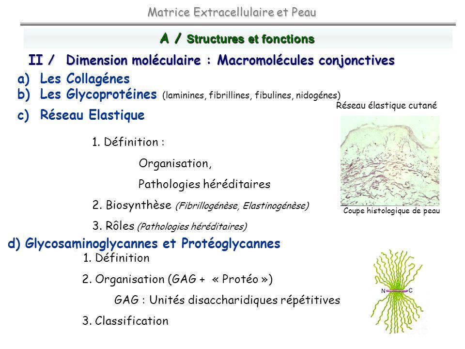 A / Structures et fonctions 1. Définition : Organisation, Pathologies héréditaires 2. Biosynthèse (Fibrillogénèse, Elastinogénèse) 3. Rôles (Pathologi