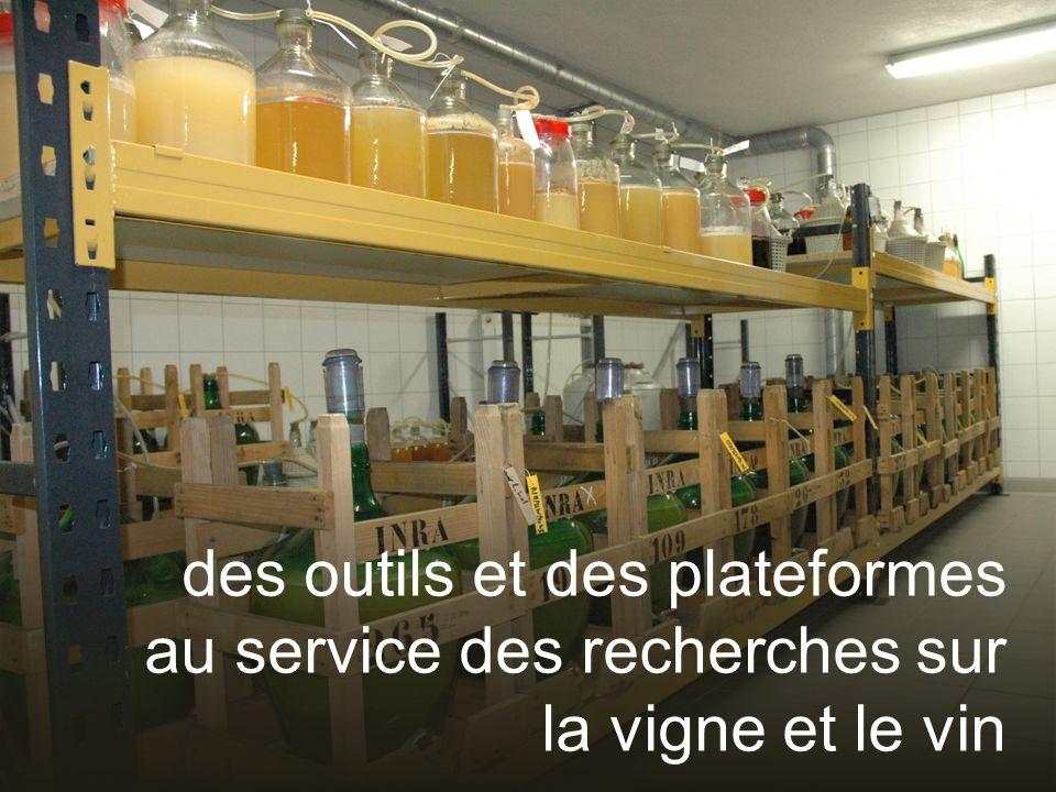 des outils et des plateformes au service des recherches sur la vigne et le vin