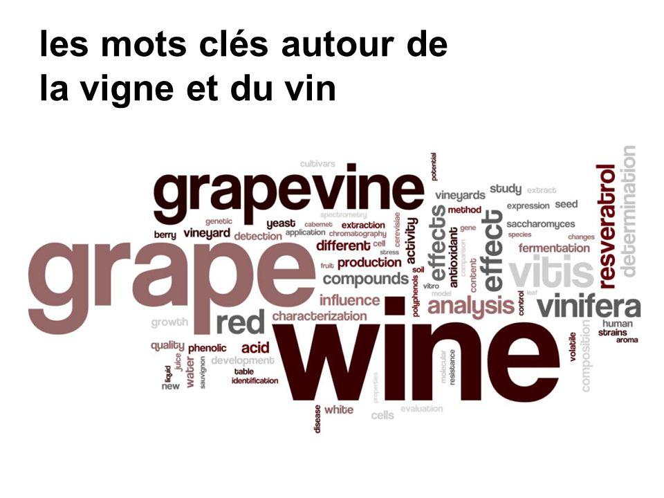 les mots clés autour de la vigne et du vin