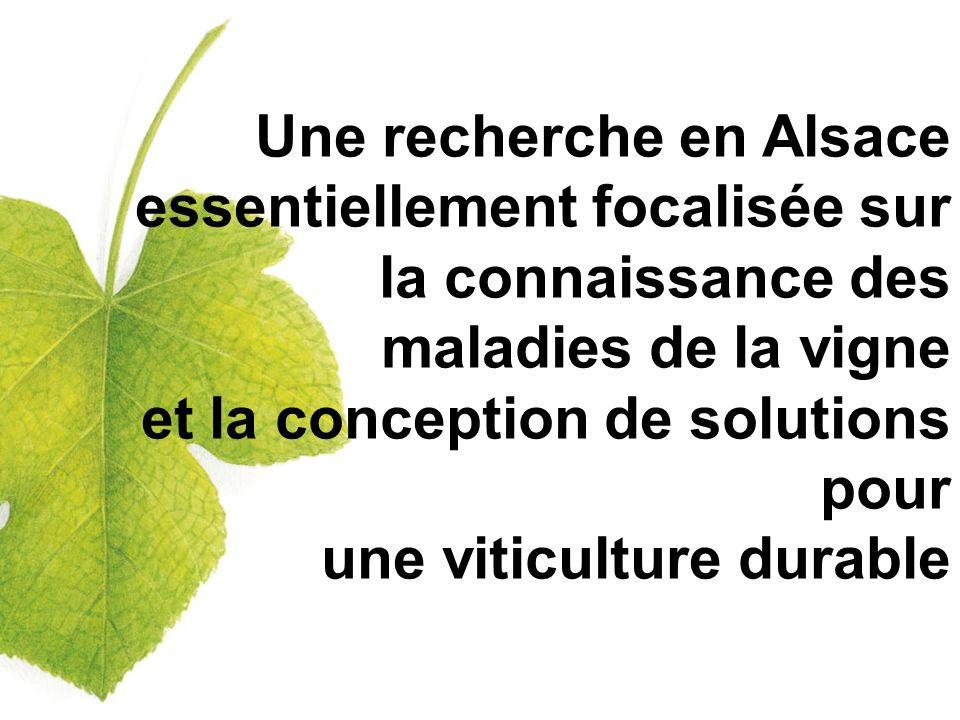 Une recherche en Alsace essentiellement focalisée sur la connaissance des maladies de la vigne et la conception de solutions pour une viticulture durable