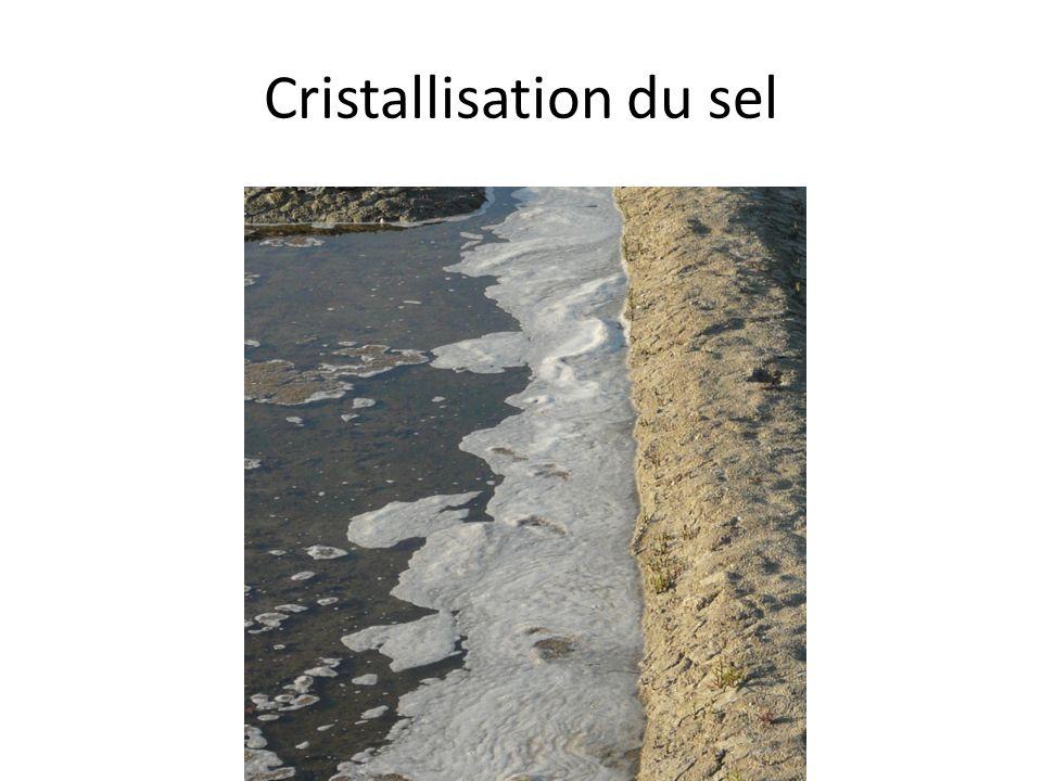 Cristallisation du sel