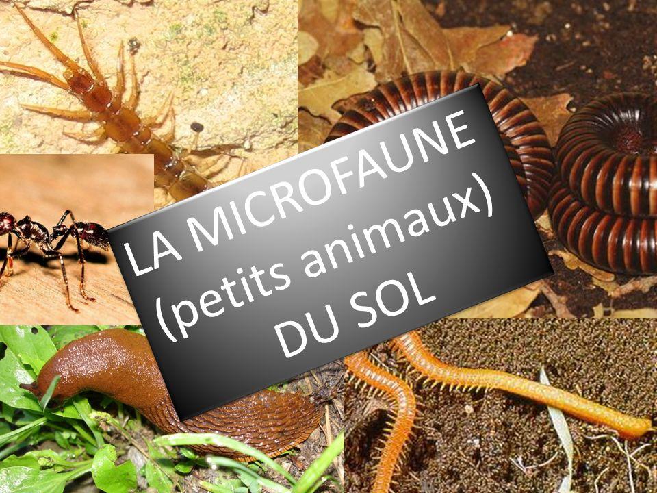 LA MICROFAUNE (petits animaux) DU SOL LA MICROFAUNE (petits animaux) DU SOL