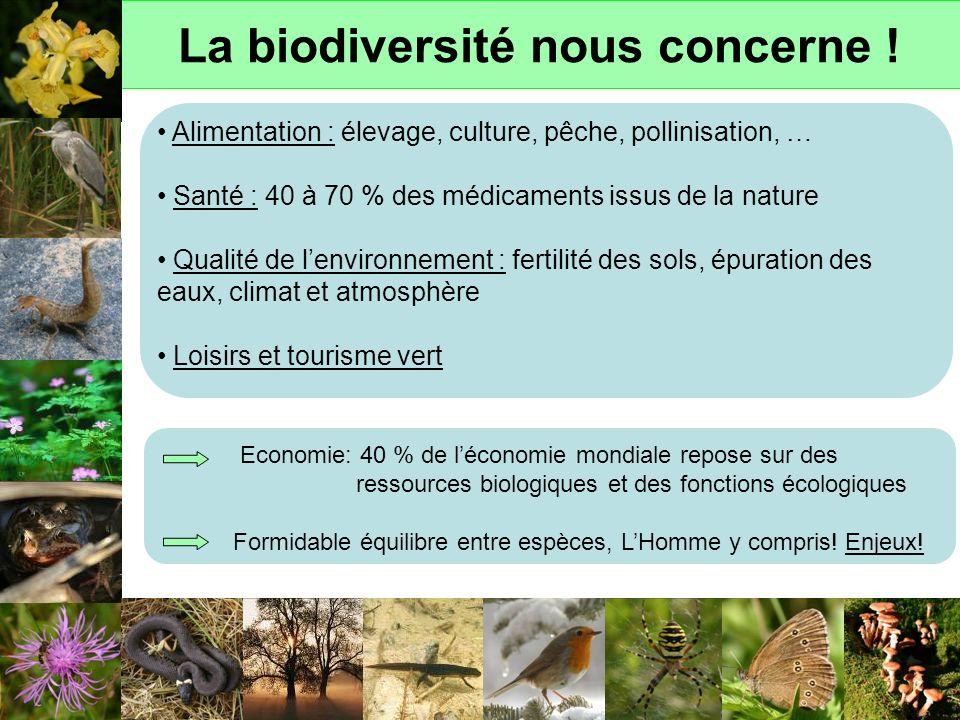 La biodiversité nous concerne ! Alimentation : élevage, culture, pêche, pollinisation, … Santé : 40 à 70 % des médicaments issus de la nature Qualité