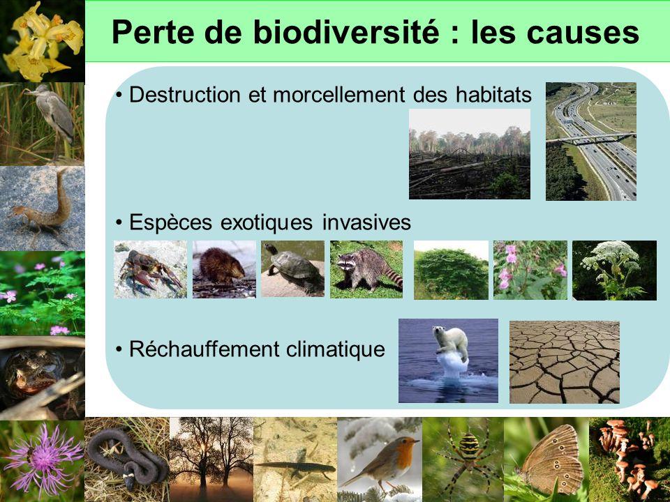 Perte de biodiversité : les causes Destruction et morcellement des habitats Espèces exotiques invasives Réchauffement climatique