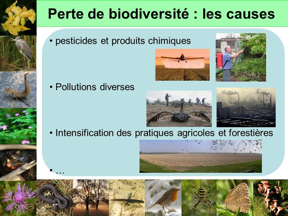 Perte de biodiversité : les causes pesticides et produits chimiques Pollutions diverses Intensification des pratiques agricoles et forestières …