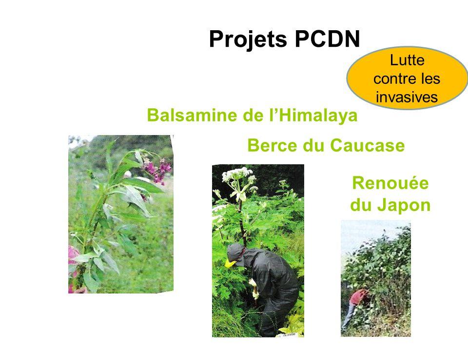 Balsamine de lHimalaya Berce du Caucase Renouée du Japon Projets PCDN Lutte contre les invasives