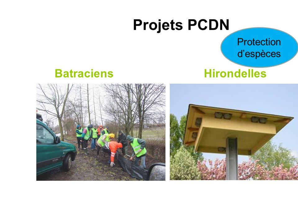 Batraciens Hirondelles Projets PCDN Protection despèces