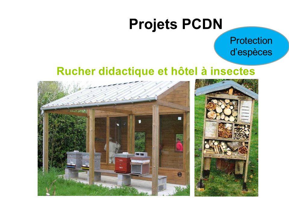 Rucher didactique et hôtel à insectes Projets PCDN Protection despèces