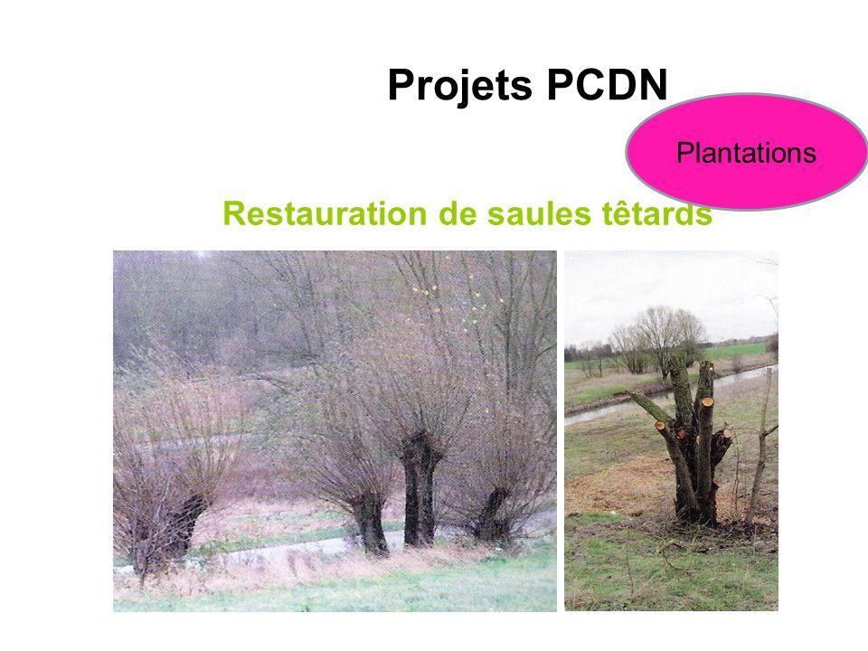 Restauration de saules têtards Projets PCDN Plantations