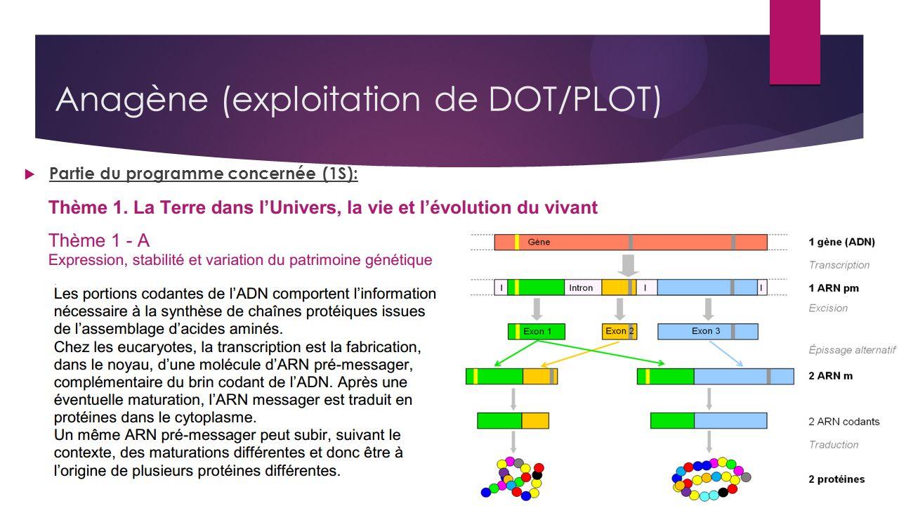 Anagène (exploitation de DOT/PLOT) Partie du programme concernée (1S):