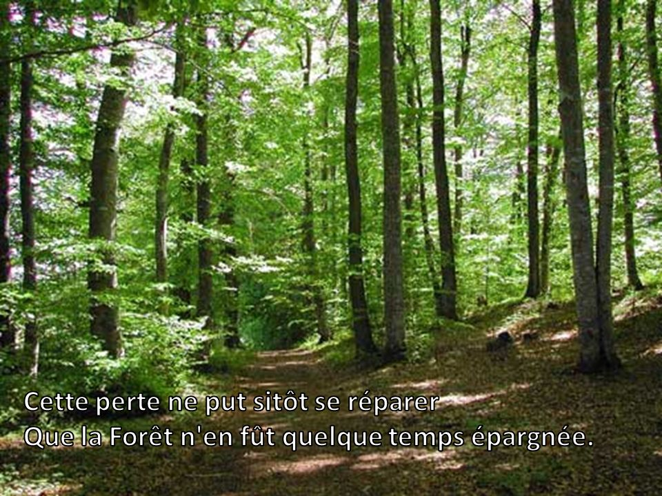 Un Bûcheron venait de rompre ou d'égarer Le bois dont il avait emmanché sa cognée.
