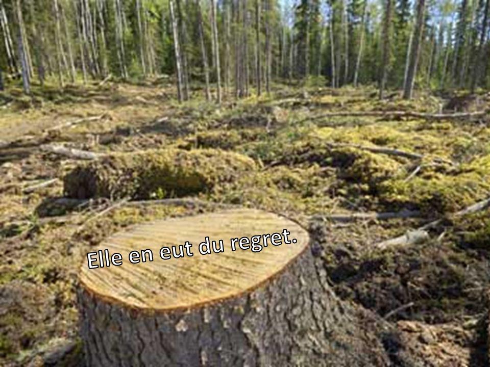 L'innocente Forêt lui fournit d'autres armes.