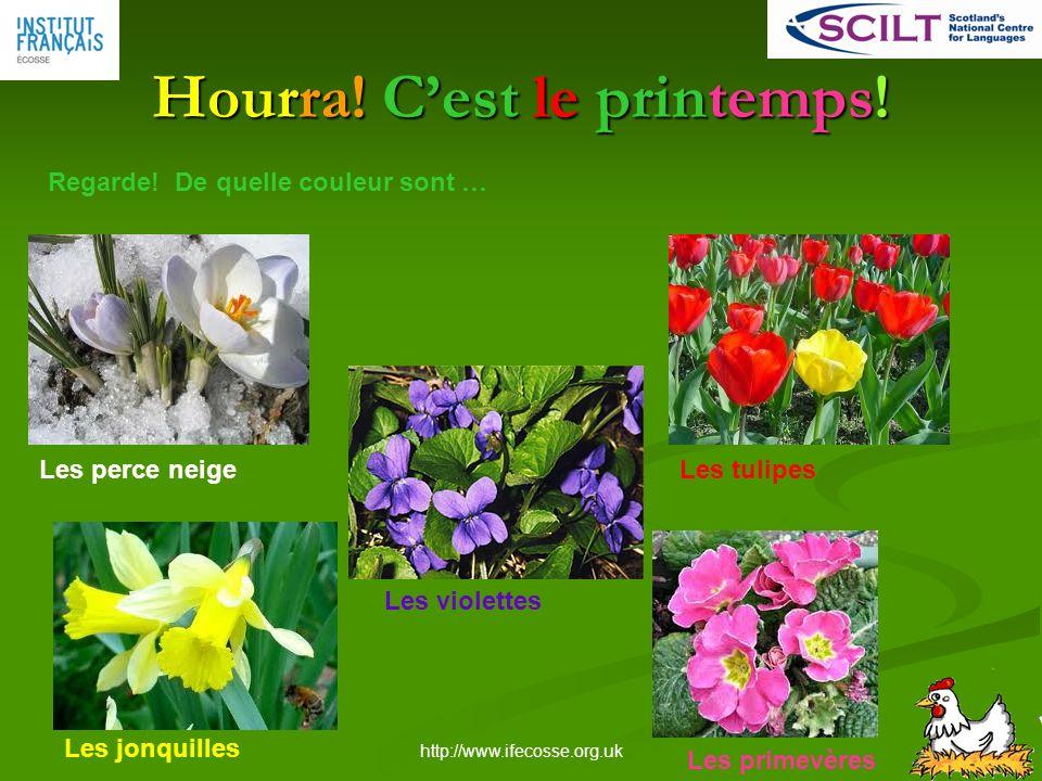 http://www.ifecosse.org.uk Hourra.Cest le printemps.