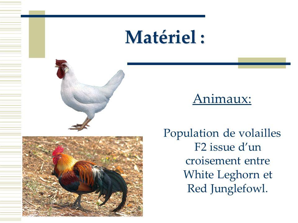 CaractèreChromosomePosition (cM) Poids du foie187 Poids du foie 844 Poids du foie (mâle) Poids du foie (femelle) 12 38 Couleur du foie (femelle) 4222 pH du blanc (mâle) pH du blanc (femelle) 2222 356 pH du blanc (mâle) pH du blanc (femelle) 4444 222 Minolta Blanc b ( Mâle ) 1034