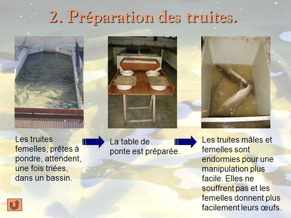 1. Les truites à la pisciculture… La pisciculture (à La Canourgue, Lozère). Élevage de truites arc-en-ciel. Dans de grands bassins deau douce. Femelle