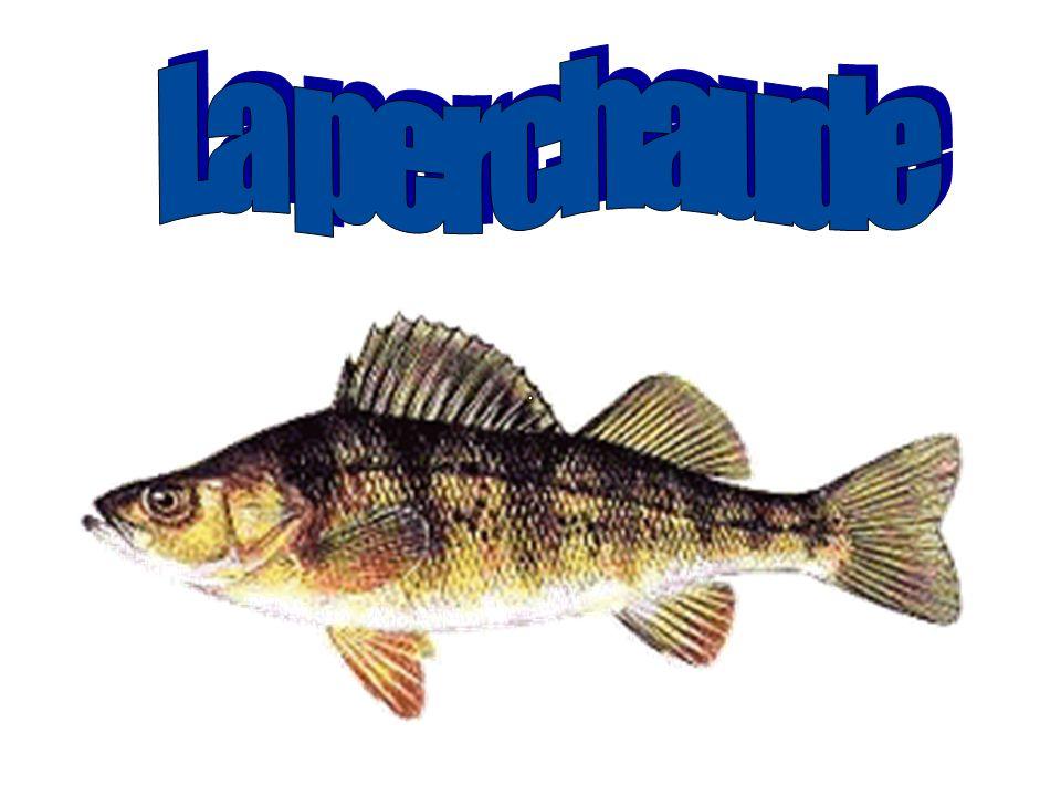 Les poissons et Lanalyse deau