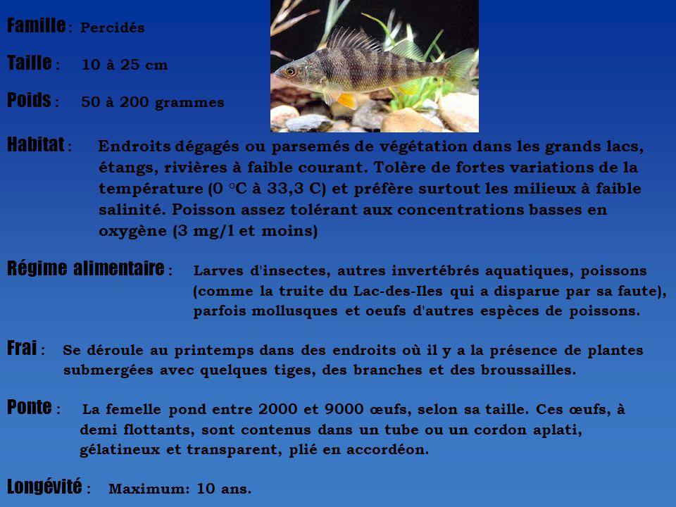 Famille : Percidés Taille : 10 à 25 cm Poids : 50 à 200 grammes Habitat : Endroits dégagés ou parsemés de végétation dans les grands lacs, étangs, rivières à faible courant.