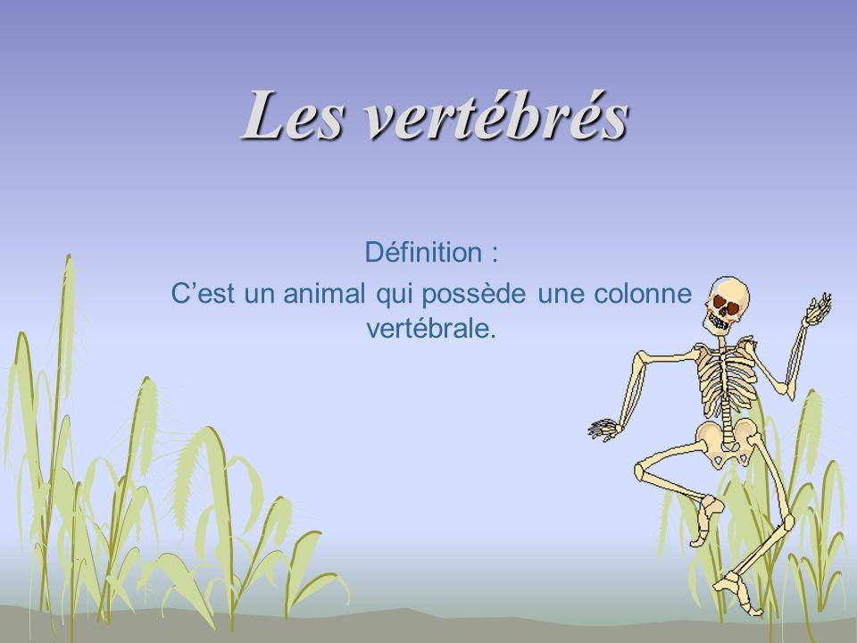 Les vertébrés Définition : Cest un animal qui possède une colonne vertébrale.