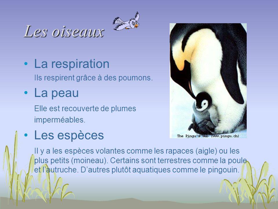 Les oiseaux La respiration Ils respirent grâce à des poumons. La peau Elle est recouverte de plumes imperméables. Les espèces Il y a les espèces volan