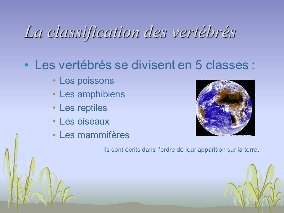 La classification des vertébrés Les vertébrés se divisent en 5 classes : Les poissons Les amphibiens Les reptiles Les oiseaux Les mammifères Ils sont