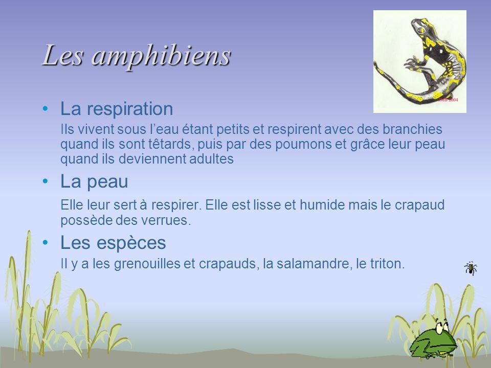 Les amphibiens La respiration Ils vivent sous leau étant petits et respirent avec des branchies quand ils sont têtards, puis par des poumons et grâce
