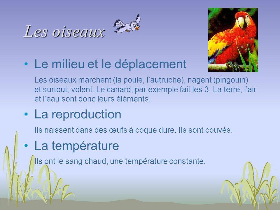 Les oiseaux Le milieu et le déplacement Les oiseaux marchent (la poule, lautruche), nagent (pingouin) et surtout, volent. Le canard, par exemple fait