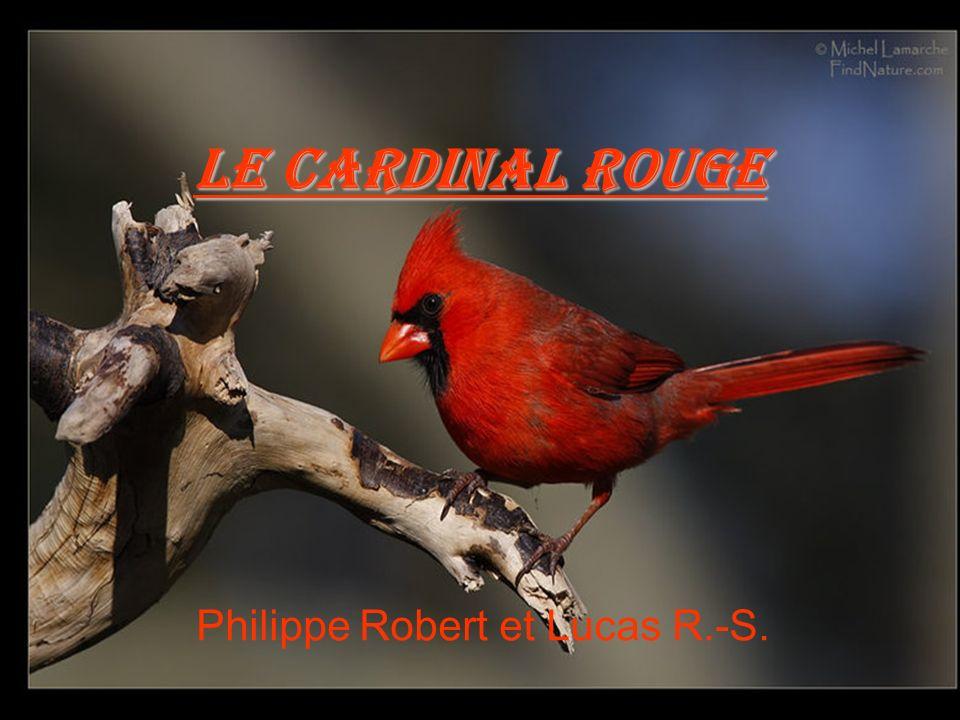 Philippe Robert et Lucas R.-S. Le Cardinal Rouge