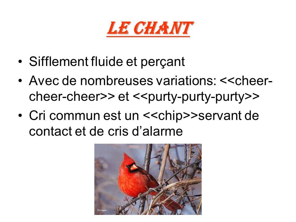 Le chant Sifflement fluide et perçant Avec de nombreuses variations: > et > Cri commun est un >servant de contact et de cris dalarme