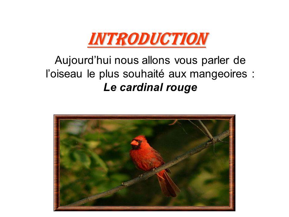 Introduction Aujourdhui nous allons vous parler de loiseau le plus souhaité aux mangeoires : Le cardinal rouge