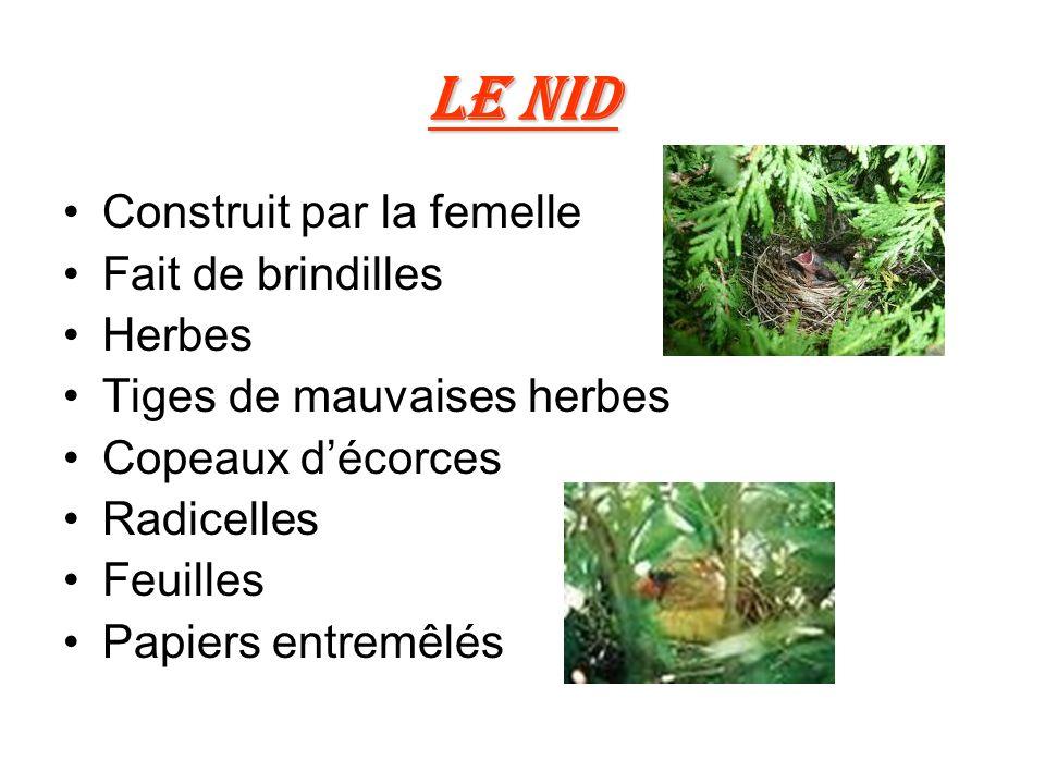 Le nid Construit par la femelle Fait de brindilles Herbes Tiges de mauvaises herbes Copeaux décorces Radicelles Feuilles Papiers entremêlés
