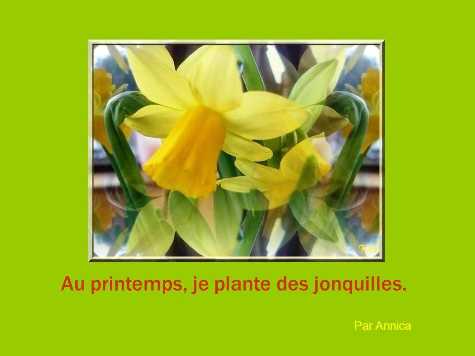 Au printemps, je plante des jonquilles. Par Annica