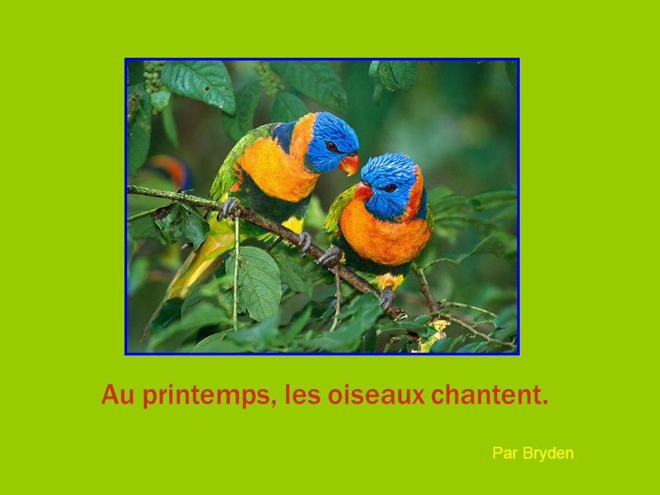 Au printemps, les oiseaux chantent. Par Bryden