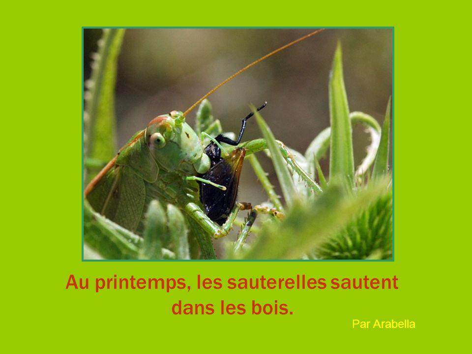 Au printemps, les sauterelles sautent dans les bois. Par Arabella