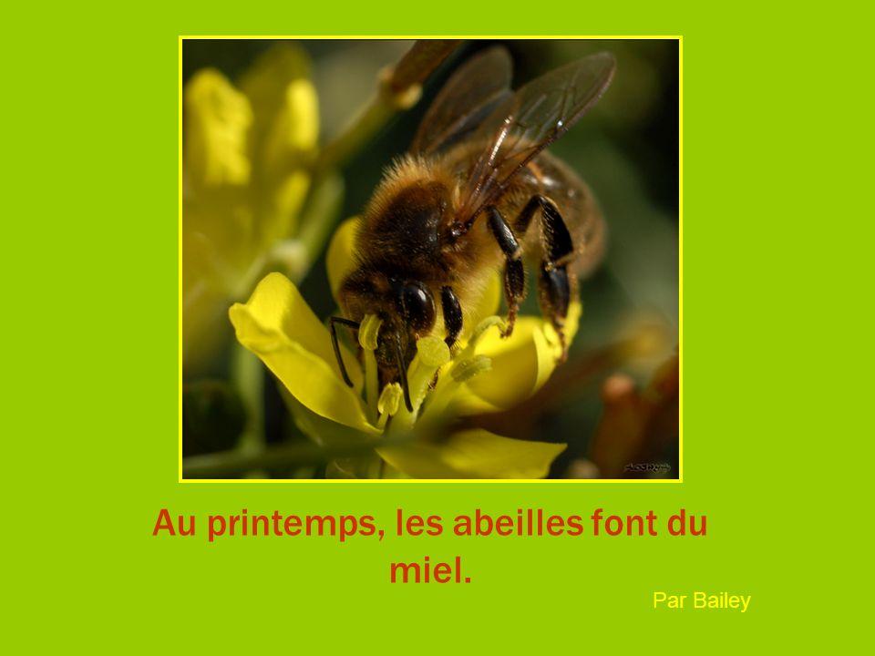 Au printemps, les abeilles font du miel. Par Bailey