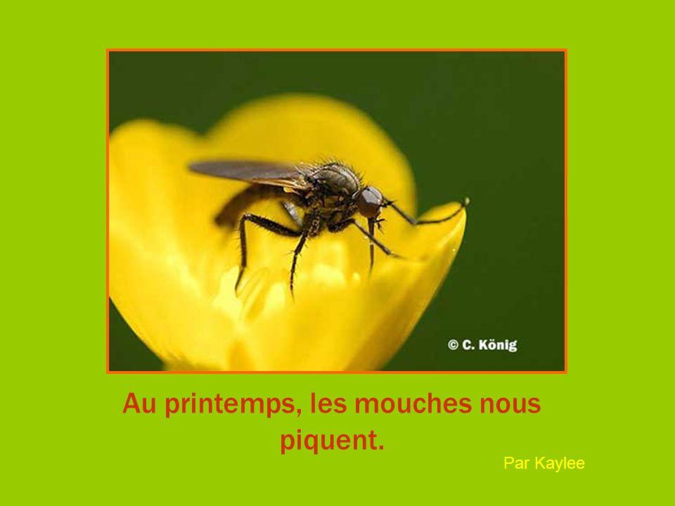 Au printemps, les mouches nous piquent. Par Kaylee
