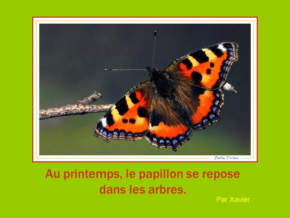 Au printemps, le papillon se repose dans les arbres. Par Xavier