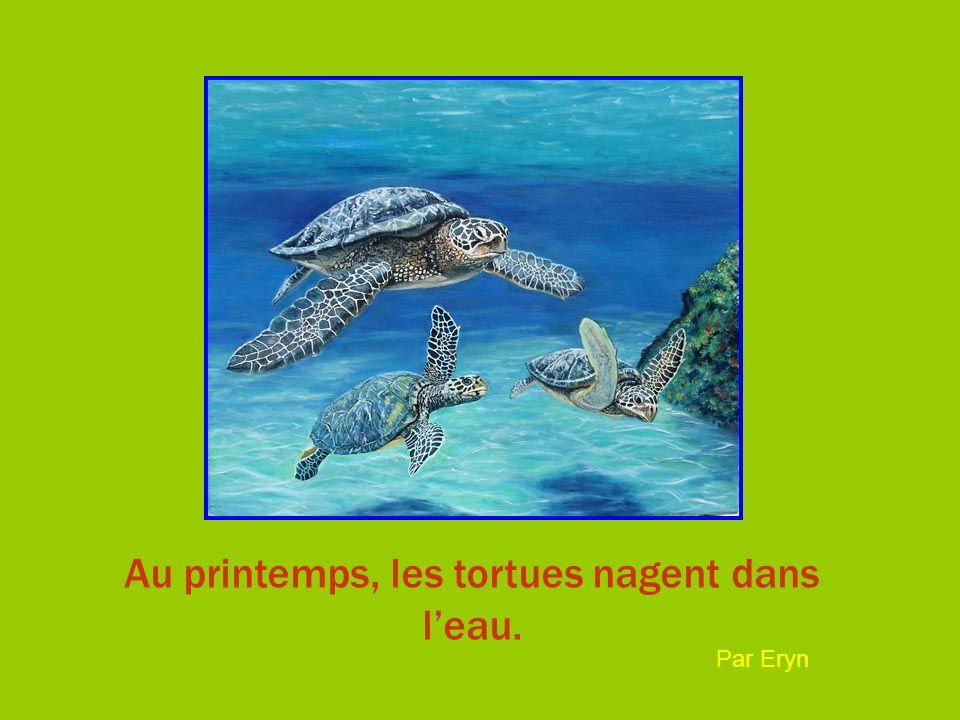 Au printemps, les tortues nagent dans leau. Par Eryn