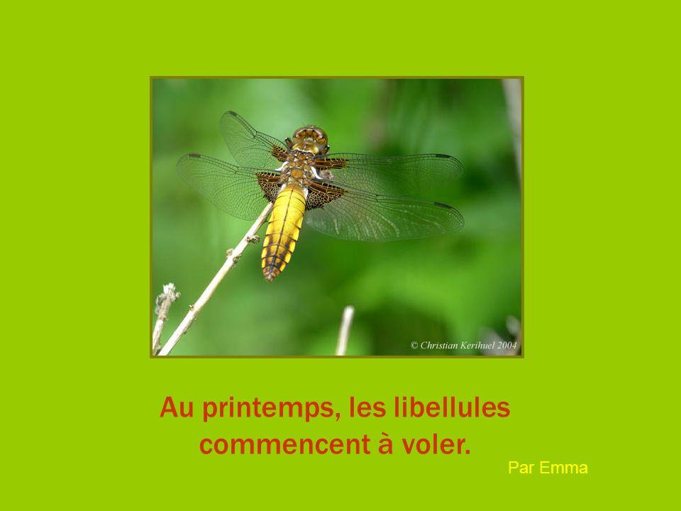 Au printemps, les libellules commencent à voler. Par Emma