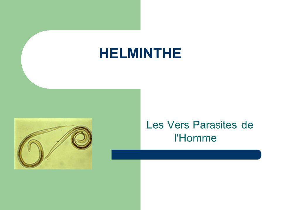 HELMINTHE Les Vers Parasites de l'Homme