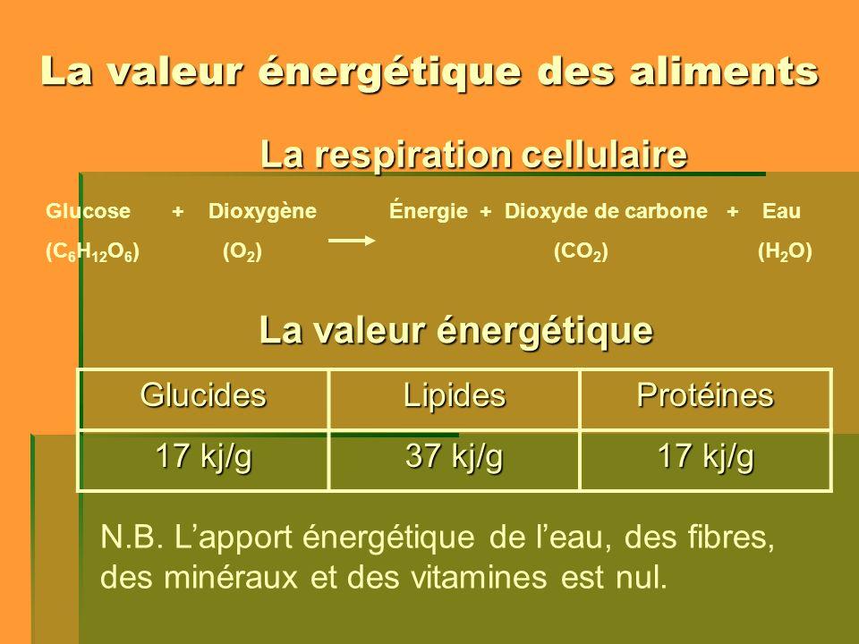 La valeur énergétique des aliments La respiration cellulaire Glucose + Dioxygène Énergie + Dioxyde de carbone + Eau (C 6 H 12 O 6 ) (O 2 ) (CO 2 ) (H