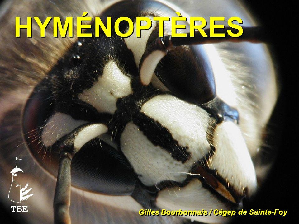 HYMÉNOPTÈRES Gilles Bourbonnais / Cégep de Sainte-Foy TBE