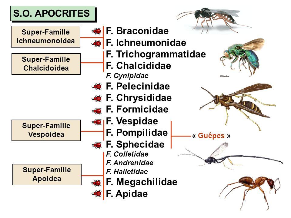 F. Braconidae F. Ichneumonidae F. Trichogrammatidae F. Chalcididae F. Cynipidae F. Pelecinidae F. Chrysididae F. Formicidae F. Vespidae F. Pompilidae