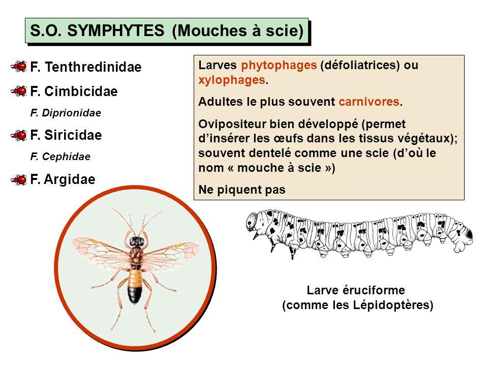 Super-Famille des Vespoidea F.