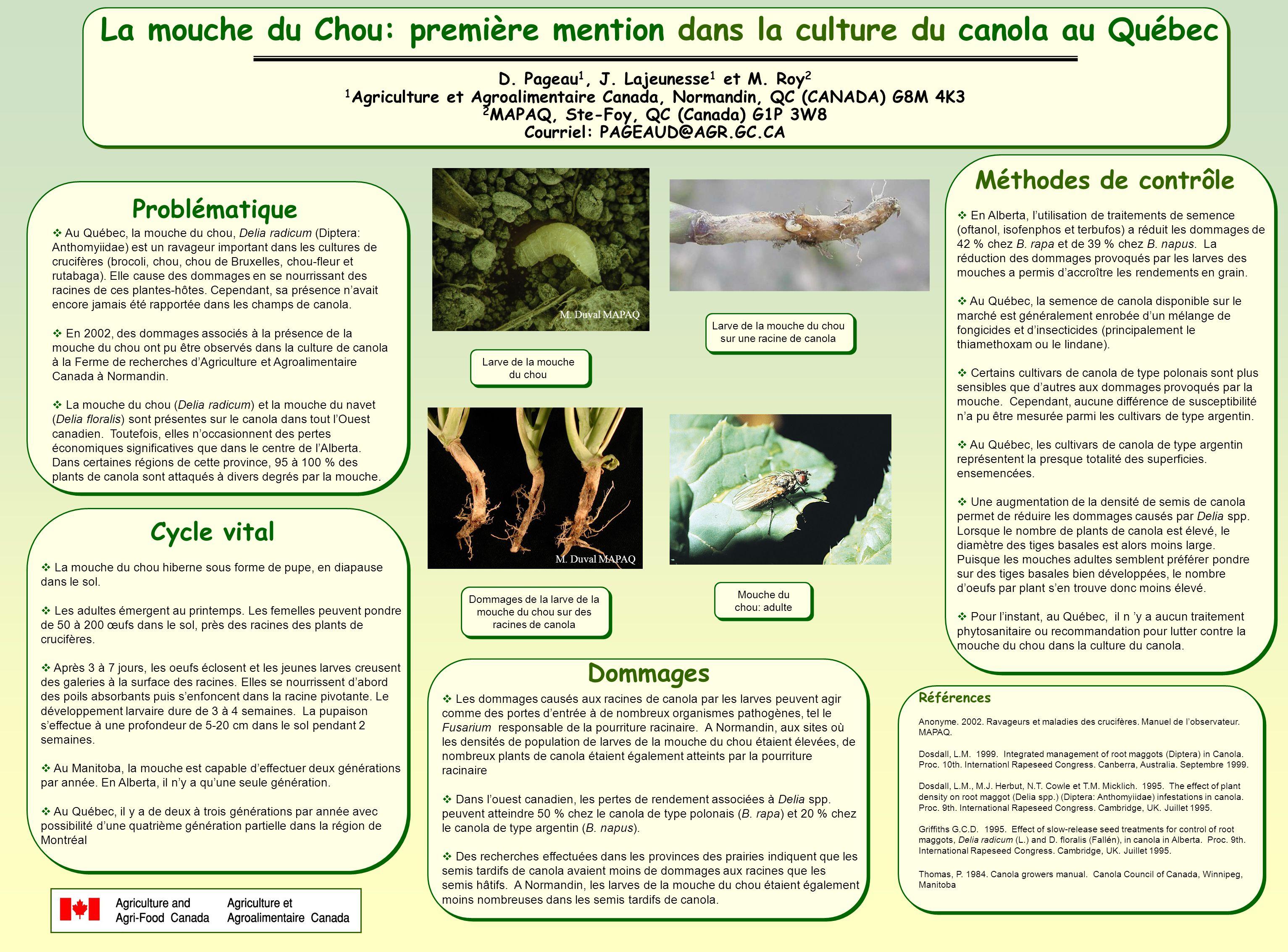 La mouche du Chou: première mention dans la culture du canola au Québec D.