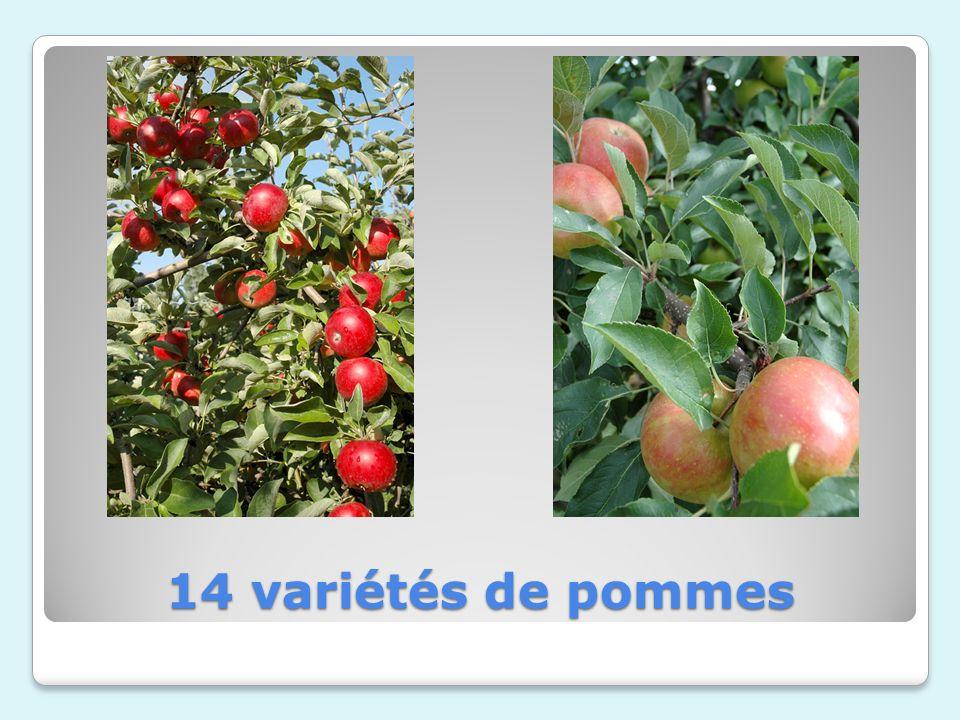 14 variétés de pommes