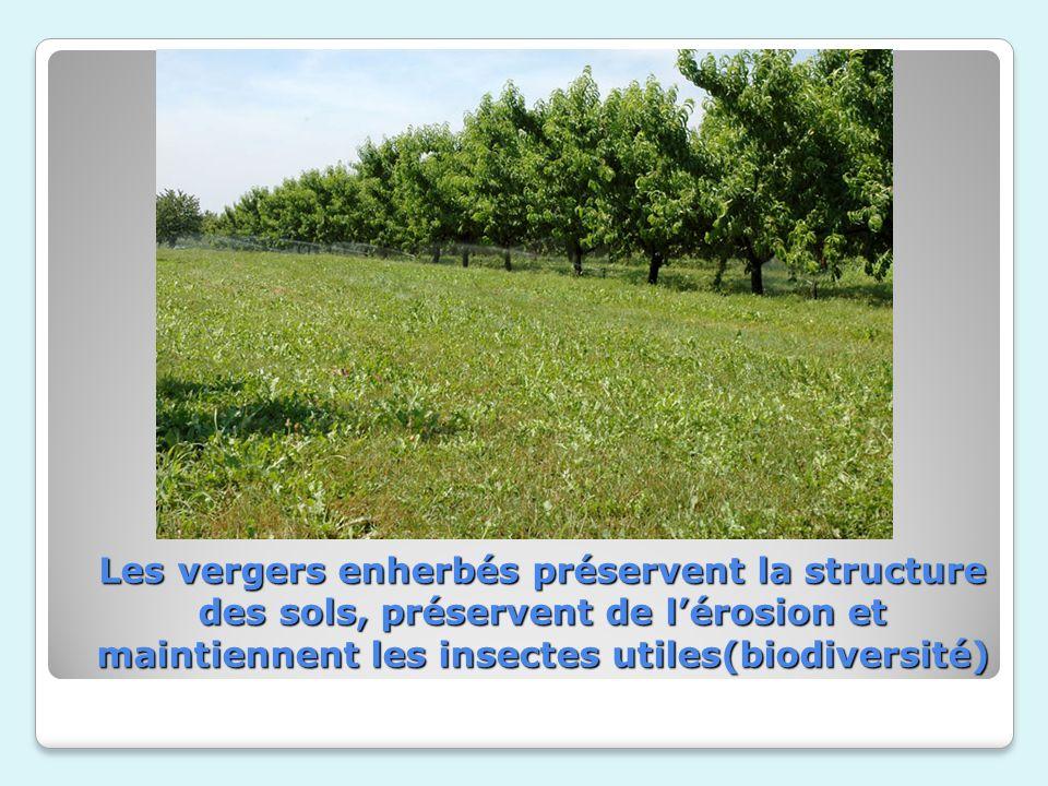 Les vergers enherbés préservent la structure des sols, préservent de lérosion et maintiennent les insectes utiles(biodiversité)
