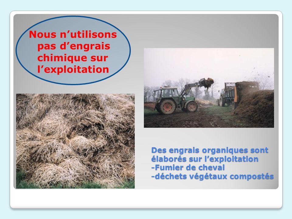 Des engrais organiques sont élaborés sur lexploitation -Fumier de cheval -déchets végétaux compostés Nous nutilisons pas dengrais chimique sur lexploi