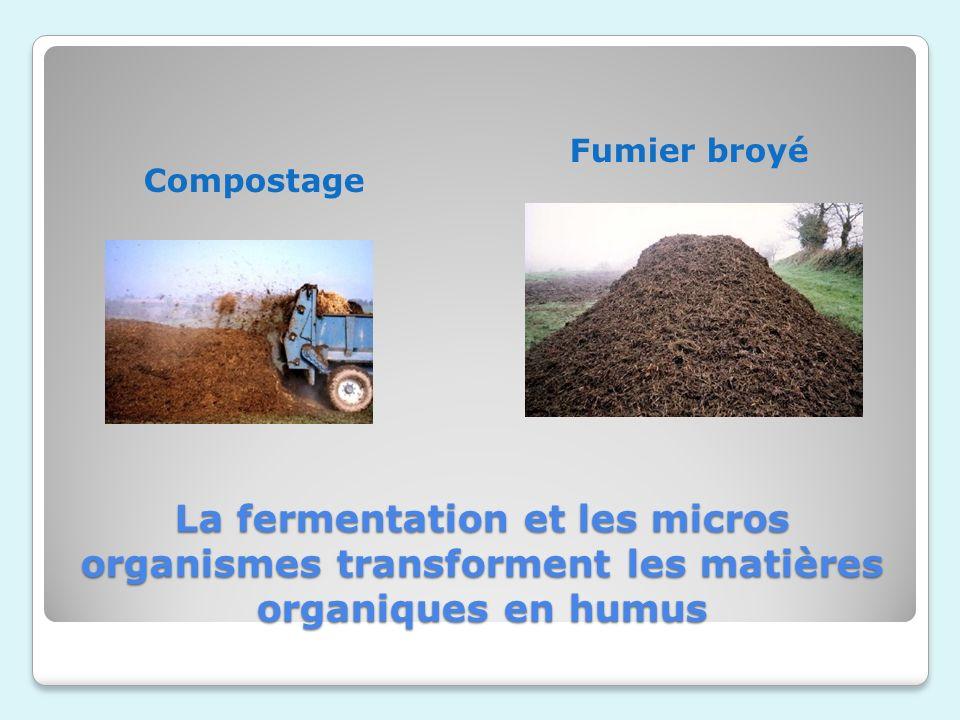 La fermentation et les micros organismes transforment les matières organiques en humus Compostage Fumier broyé