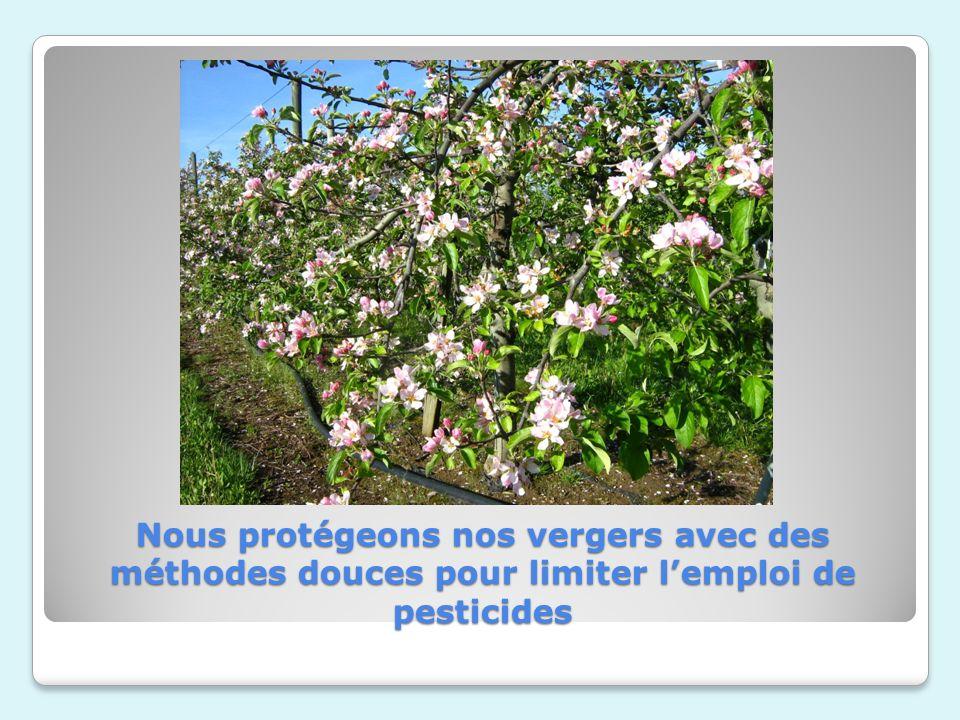 Nous protégeons nos vergers avec des méthodes douces pour limiter lemploi de pesticides